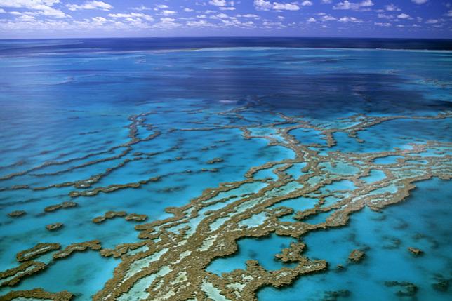 """Képtalálat a következőre: """"nagy korallzátony"""""""