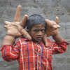Forr�s: NORTHFOTO/Barcroft India/Barcroft India