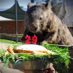 Forr�s: NORTHFOTO/C Ballarat Wildlife Park / SWNS/Ballarat Wildlife Park / Swns