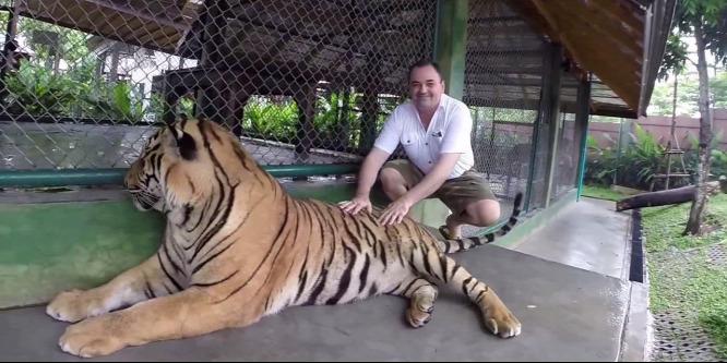 Turistára támadt egy tigris Phuketben