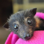 Forr�s: Facebook/Tolga Bat Hospital