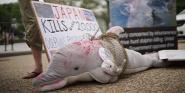 Forr�s: AFP/Mandel Ngan