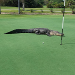 Forr�s: Facebook/Myakka Pynes Golf Club