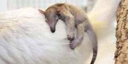 Forr�s: Denver Zoo/Charlotte Bassin