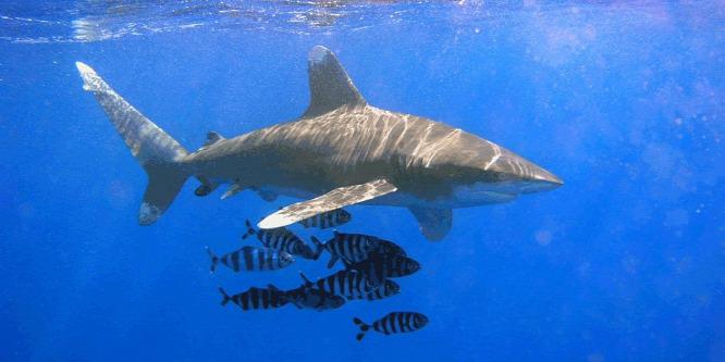Hogyan kerüljük el a cápatámadást?