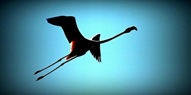 http://static.origos.hu/s/img/i/1504/20150416fekete-flamingo1.jpg?w=666&h=333