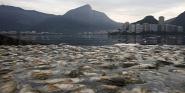Forr�s: MTI/EPA/EFE/Marcelo Sayao