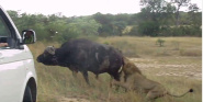Forr�s: Kruger Sightings / Youtube