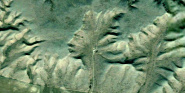 Forr�s: Google Earth