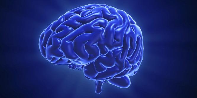 Magyarok térképezték fel az agyi kapcsolatok változékonyságát