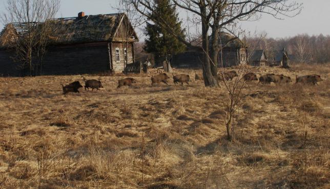 """Képtalálat a következőre: """"Csernobili katasztrófa-kép"""""""