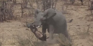 Forr�s: Kruger Sightings/You Tube