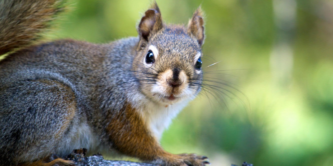 A mókusok is lehetnek stresszesek