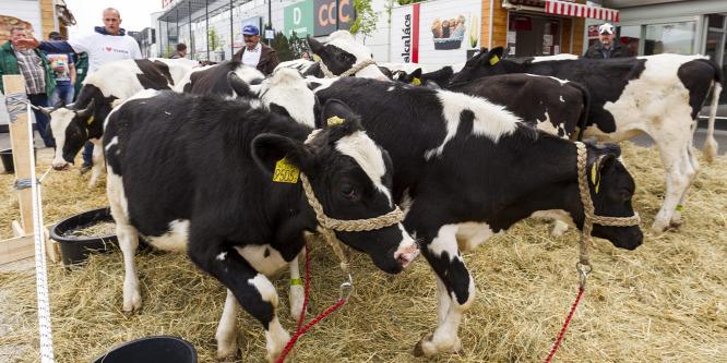 Fazekas Sándor: Probléma, hogy külföldr�l hoznak be tejet