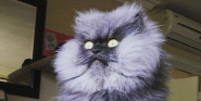 Forr�s: Colonel Meow Facebook oldala