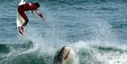 Forr�s: Shark Enthusiast's Club