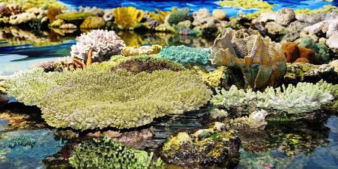 Ennyit érnek a korallzátonyok dollárban kifejezve