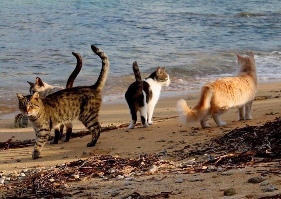 Ilyen az, amikor a macskák strandolnak