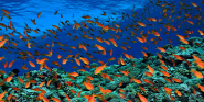 Forr�s: Reef Rainforest