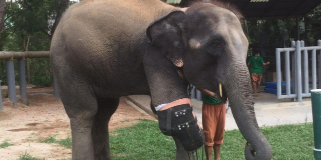 Forr�s: Friends of the Asian Elephant Foundation