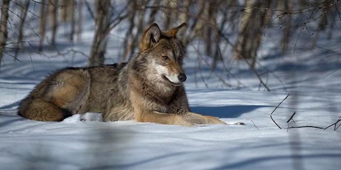 Drámai mértékben csökkentek az állatfajok populációi