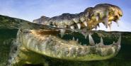 Forrás: Facebook/Le Bonheur Crocodile Farm