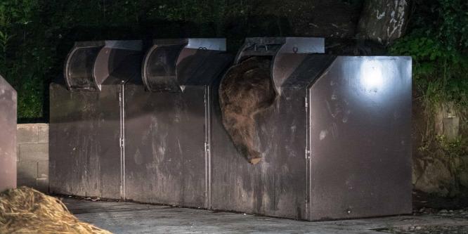 Kukázó medvét fotóztak Tusnádfürdőn