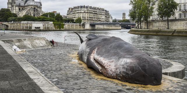 Forrás: AFP/Bertrand Guay