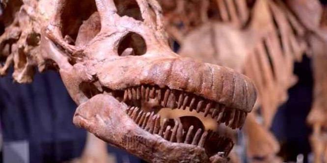 A Patagotitan nevet kapta a világ legnagyobb dinoszaurusza