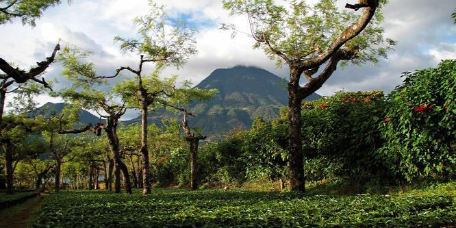 Íme, a világ legszebb kávéültetvényei - Fotógaléria