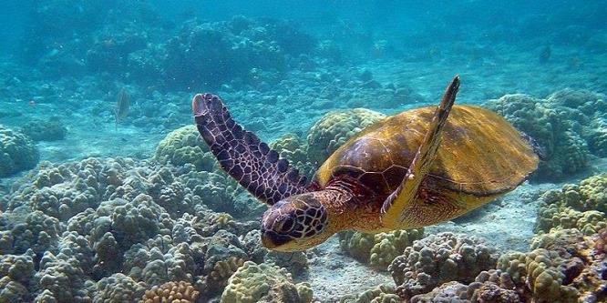 A teknősök előnyt élveznek a milliomosokkal szemben