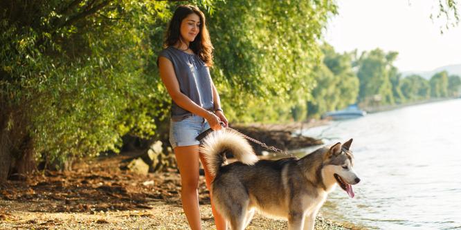Megérkezett a kutyasétáltatás Uberje