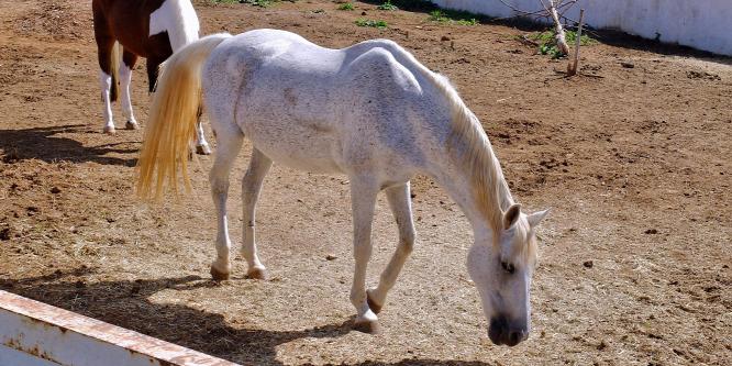 Térfigyelő kamera vette fel, ahogy egy férfi megerőszakol egy lovat