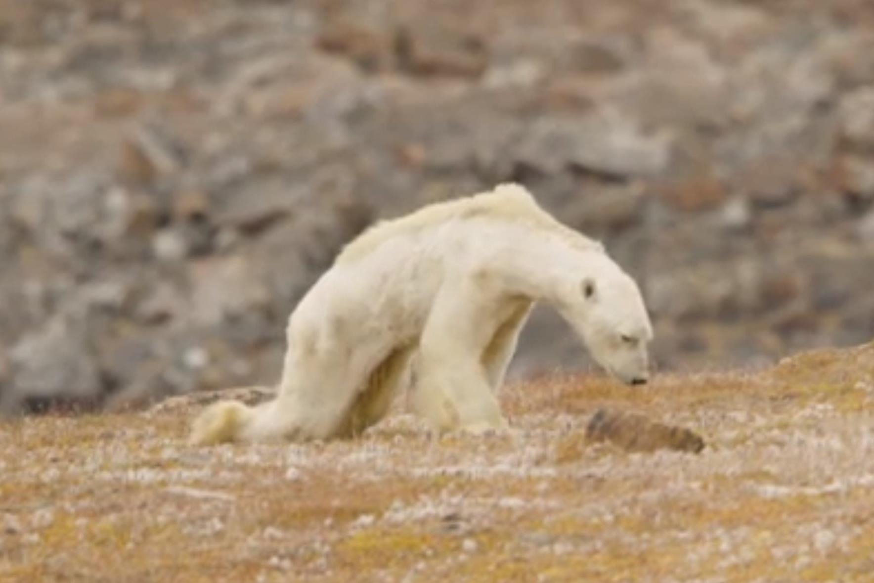 Friss hírek: A klímaváltozás okozta tragédia egyetlen felvételen.
