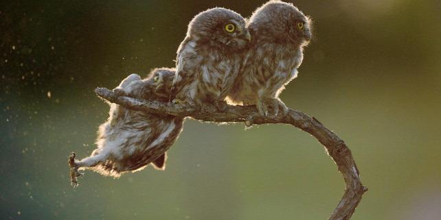 Forrás: Comedy Wildlife Photo Awards/Kercz Tibor