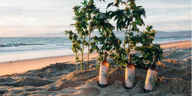 Forrás: Rebel Coast Winery