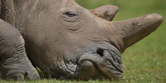 Forrás: AFP/Tony Karumba