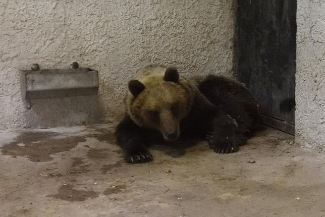 Visszatért a medve Magyarországra - videó!