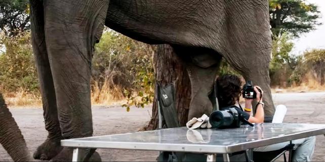 Forrás: YouTube/Kruger National Park