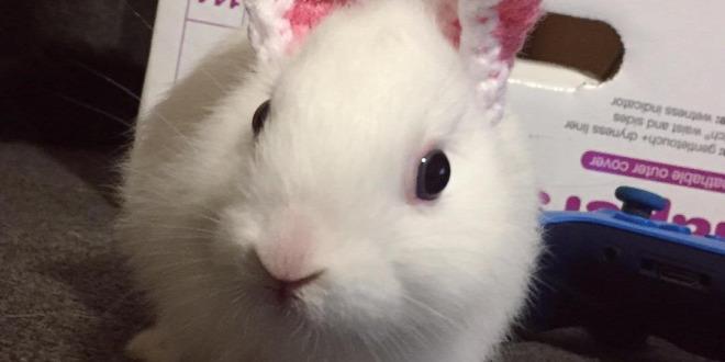 Forrás: Instagram/Mimi The Bunny