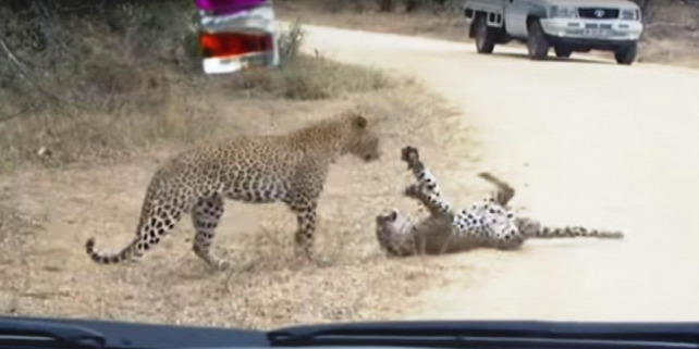Forrás: YouTube/Kruger Sightings