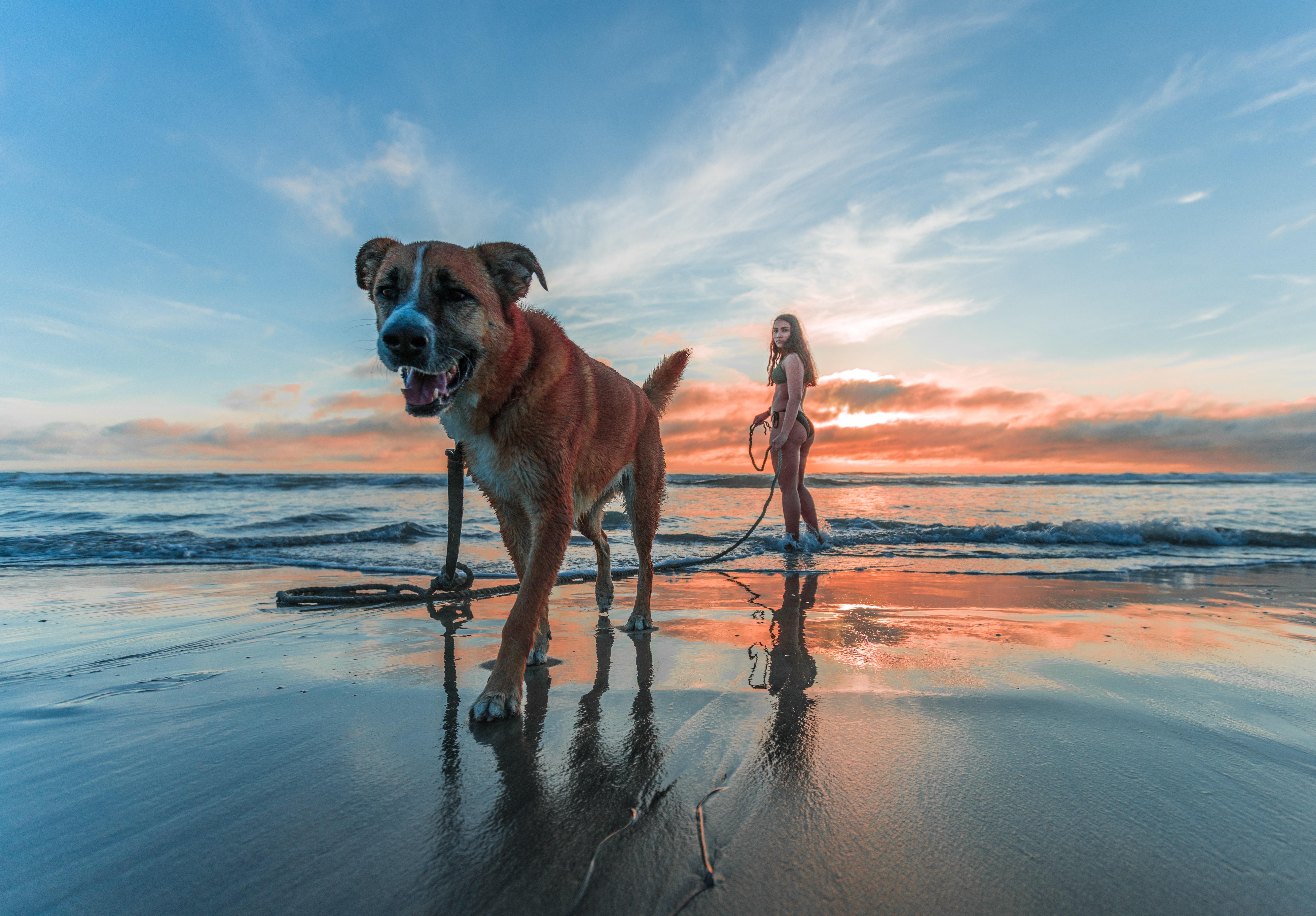 Kutyatartás a hosszú, boldog élet titka
