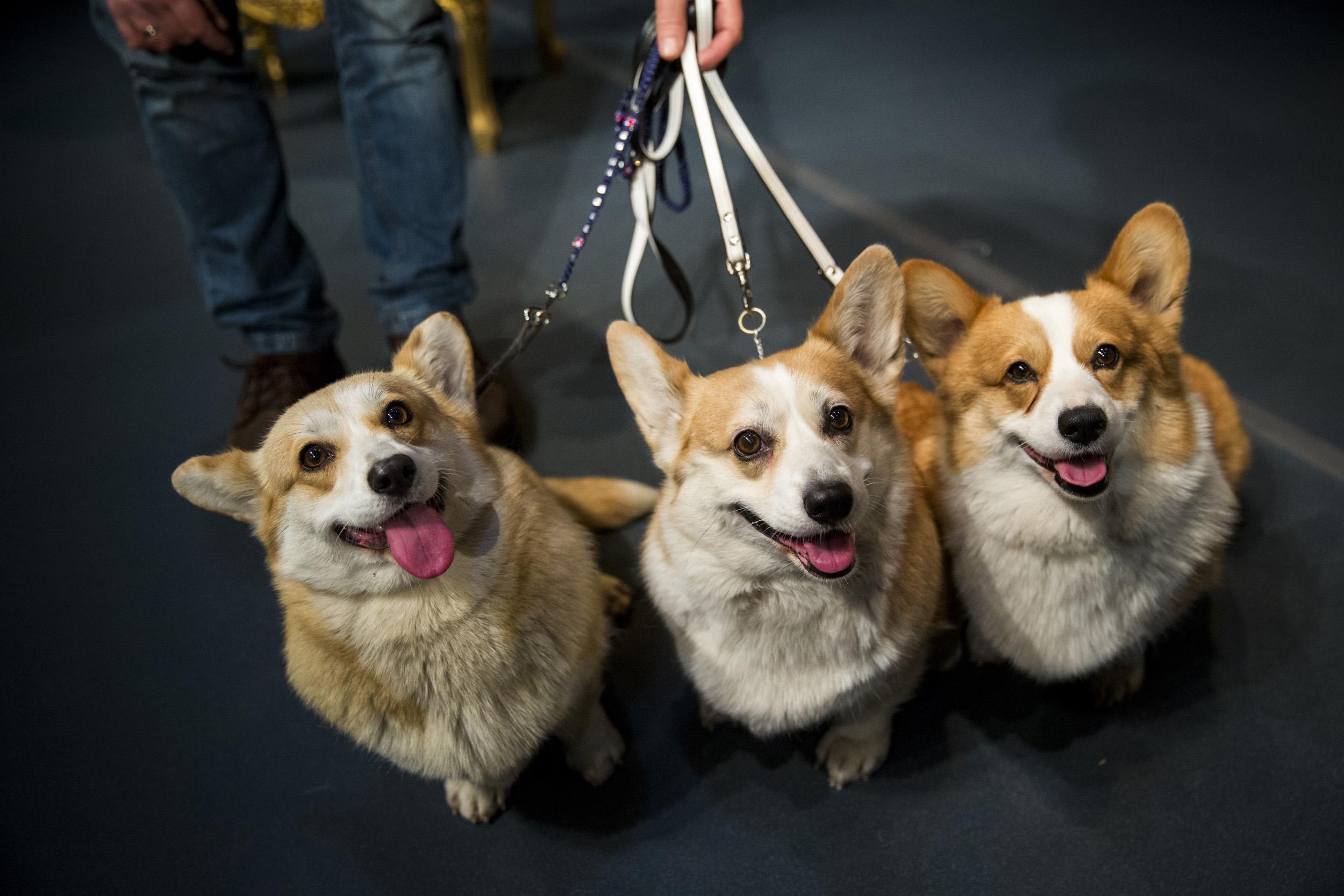 Ezek a kutyák a színház új sztárjai