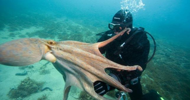 Az okos polip majdnem megfojtotta a rátámadó cápát